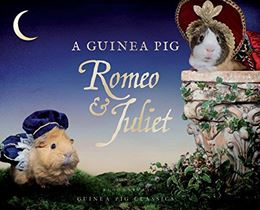 GUINEA PIG ROMEO AND JULIET
