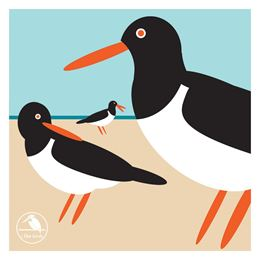 I LIKE BIRDS: OYSTER CATCHER BOXED NOTECARDS